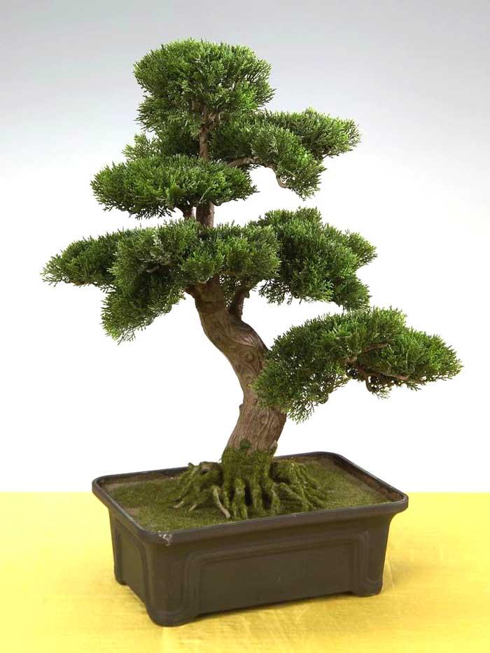 bonsai yamamoto zeder 62x45cm pf kunstpflanzen k nstlicher. Black Bedroom Furniture Sets. Home Design Ideas