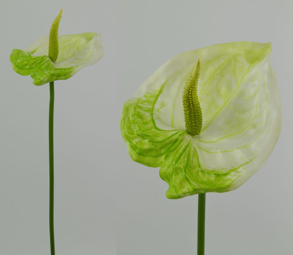 anthurie latex 45cm wei gr n cg kunstblumen kunstpflanzen k nstliche blumen. Black Bedroom Furniture Sets. Home Design Ideas