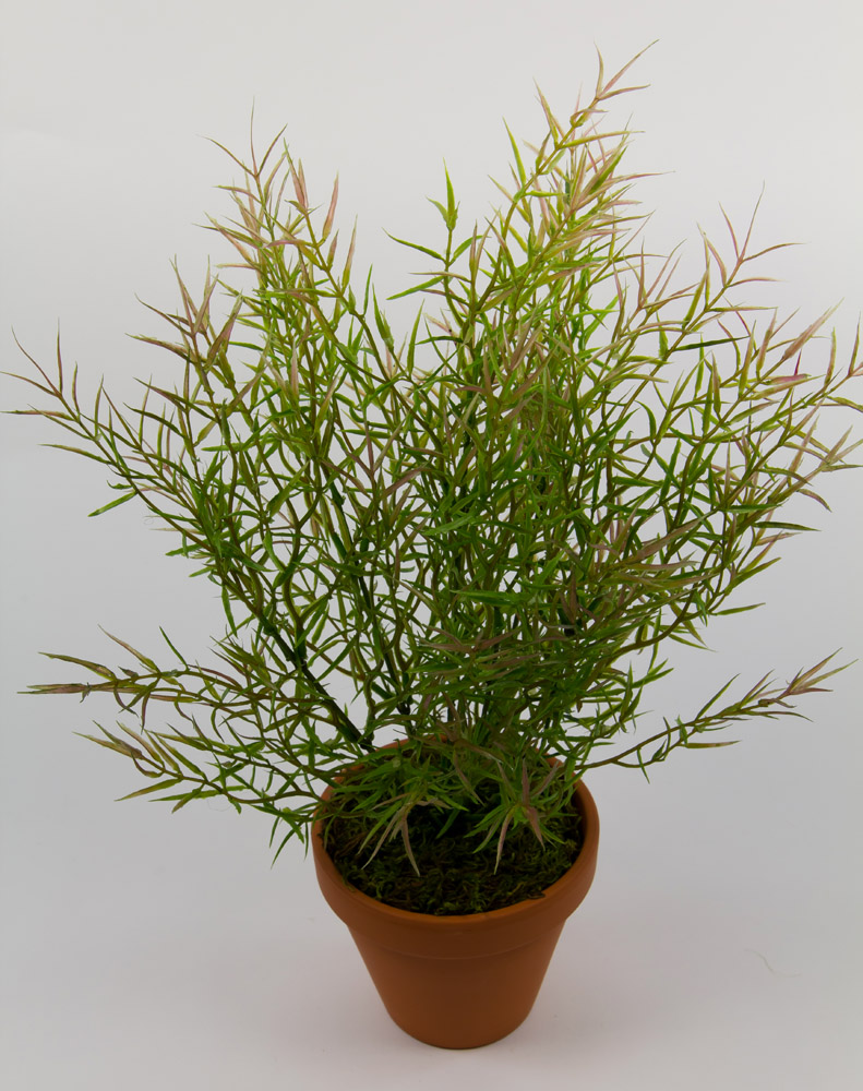 asparagusbusch 40cm ohne topf dp kunstpflanzen k nstliche pflanzen asparagus ebay. Black Bedroom Furniture Sets. Home Design Ideas