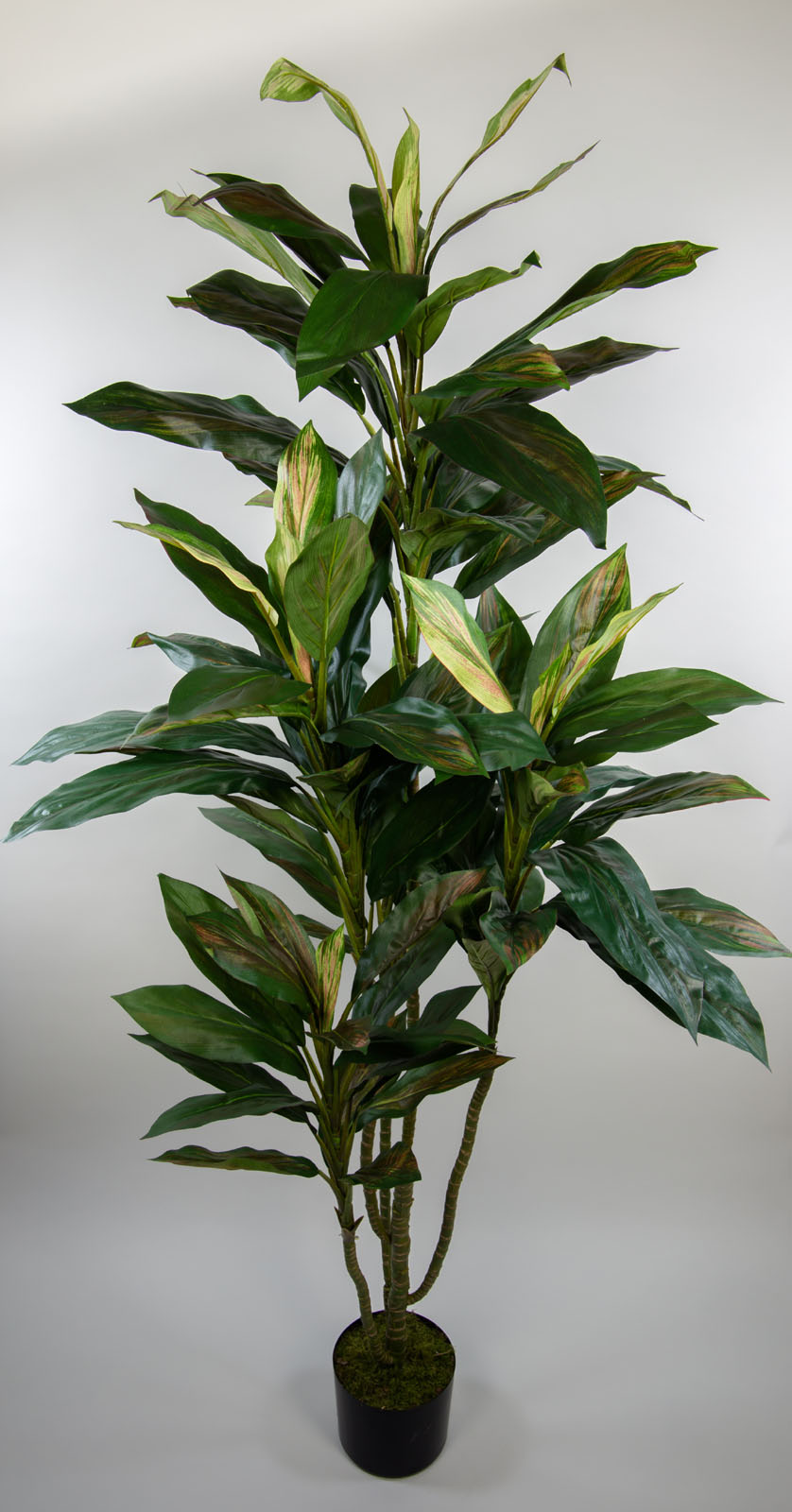 dracena fragrans 170cm nt k nstliche pflanzen palmen. Black Bedroom Furniture Sets. Home Design Ideas