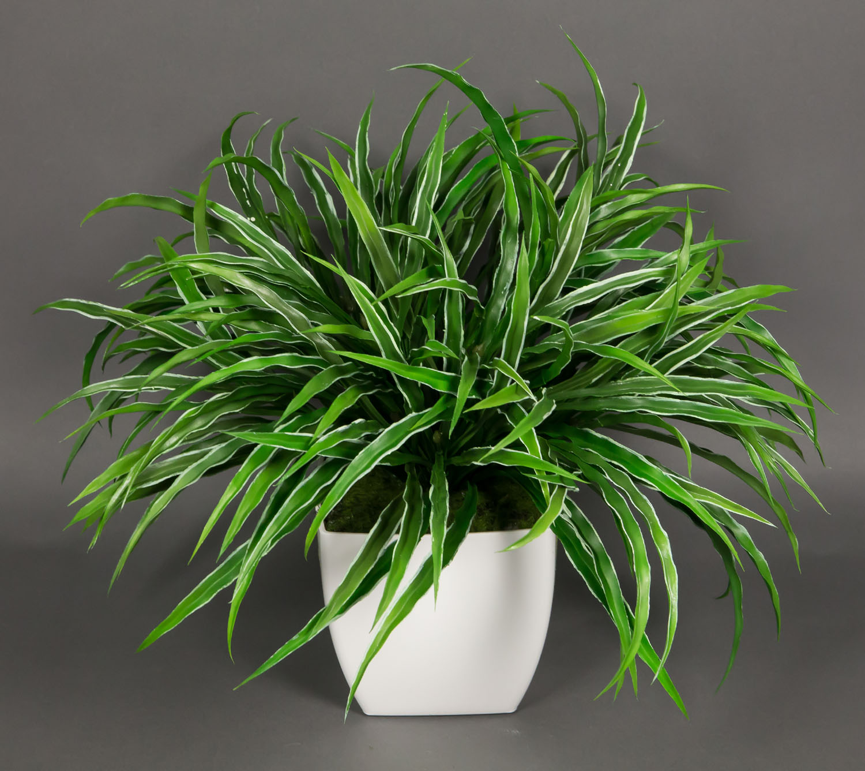dracenabusch 48x38cm gr n wei im wei en dekotopf lm k nstliche dracena pflanzen ebay. Black Bedroom Furniture Sets. Home Design Ideas