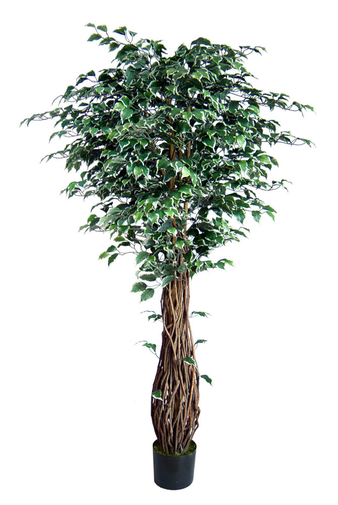 ficus liana 150cm gr n creme da k nstlicher baum dekobaum kunstbaum ficusbaum ebay. Black Bedroom Furniture Sets. Home Design Ideas