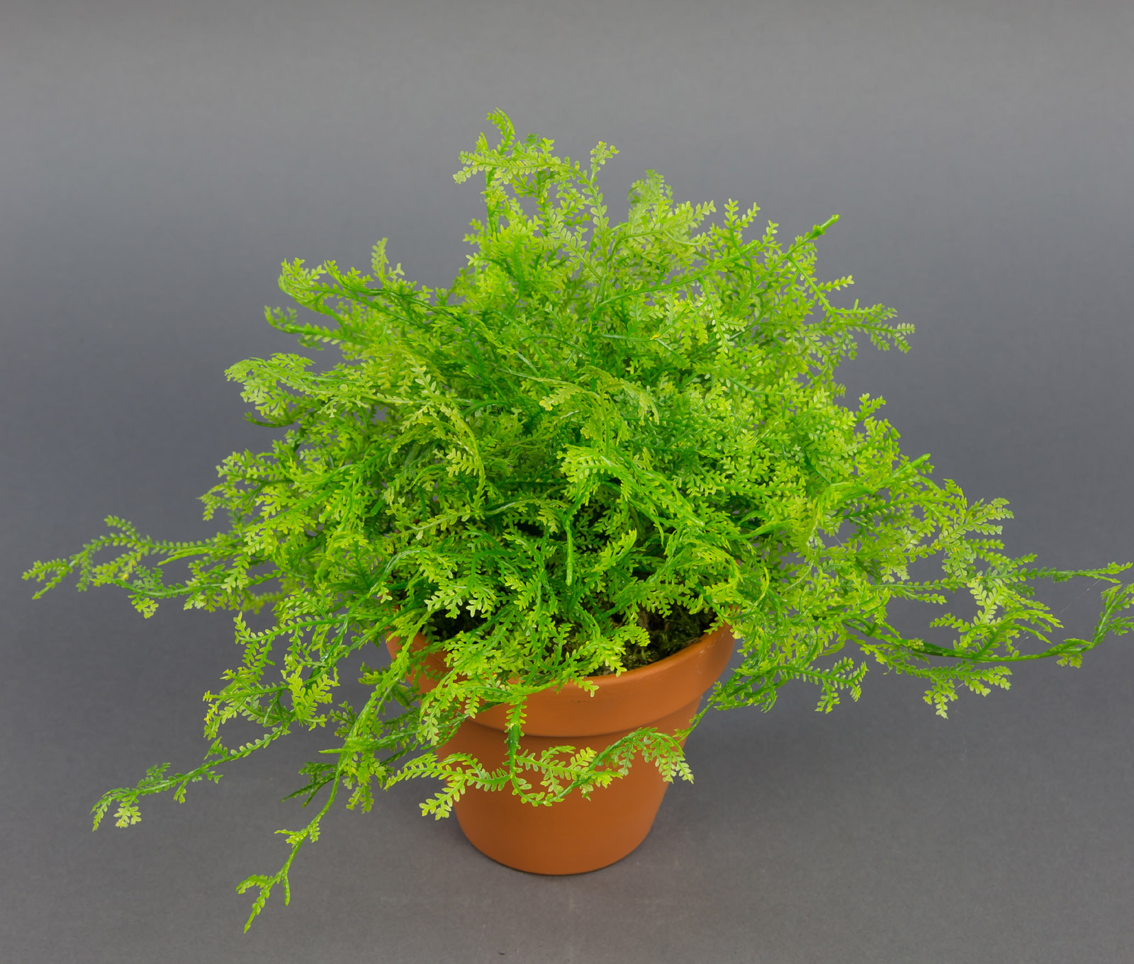 Blumen im topf pflanzen wohndesign und inneneinrichtung for Stylische zimmerpflanzen
