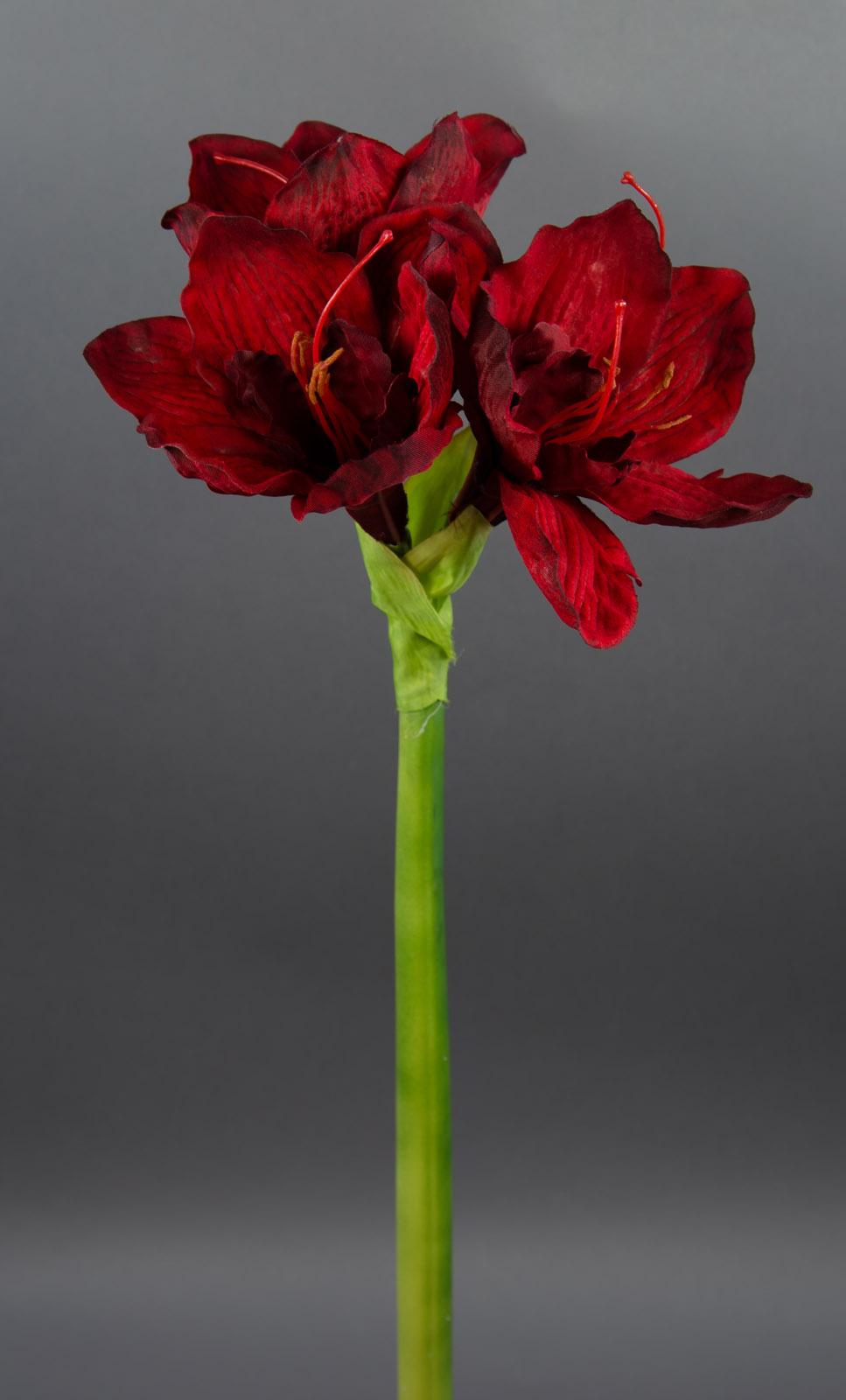 grosse amaryllis 65cm dunkelrot ga seidenblumen k nstliche blumen kunstblumen. Black Bedroom Furniture Sets. Home Design Ideas