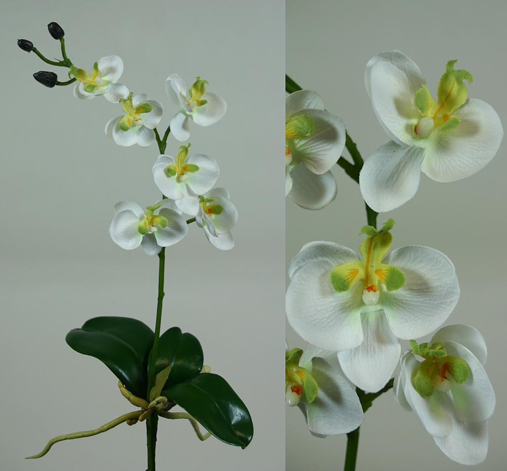 mini orchidee wei mit blatt und wurzeln cg kunstblumen ebay. Black Bedroom Furniture Sets. Home Design Ideas