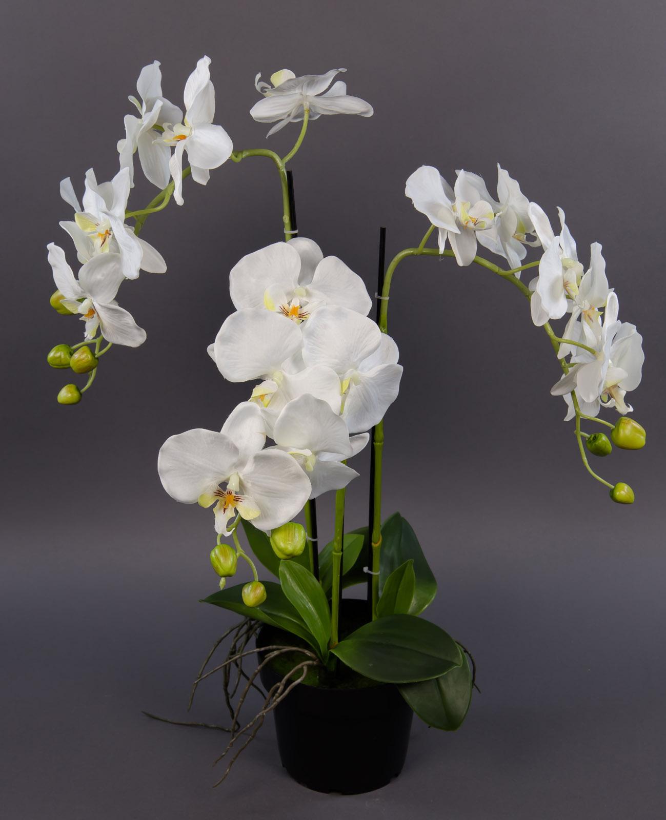 orchidee 60x40cm wei ga kunstpflanzen k nstliche blumen. Black Bedroom Furniture Sets. Home Design Ideas