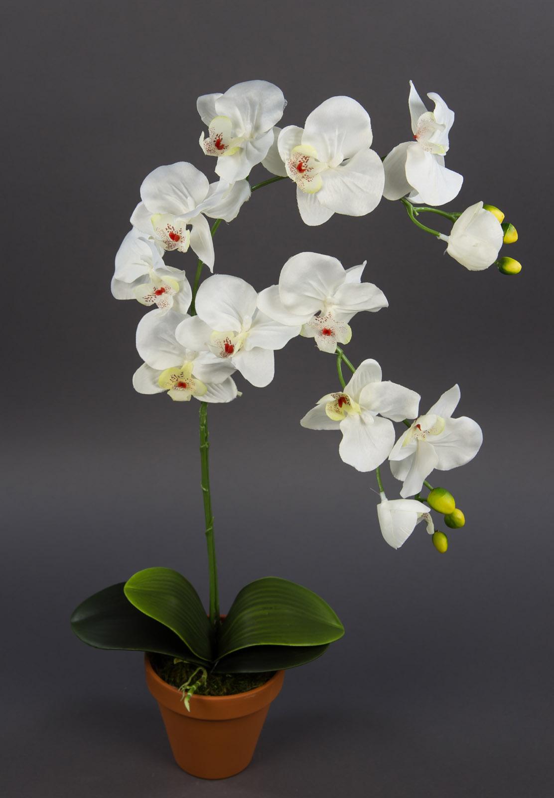orchidee 65cm wei creme dp kunstblume k nstliche blumen. Black Bedroom Furniture Sets. Home Design Ideas