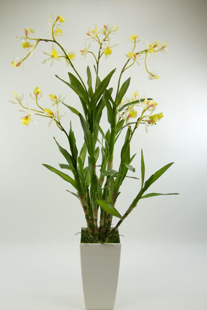 orchideen arrangement dendrobie 100cm wei creme ar. Black Bedroom Furniture Sets. Home Design Ideas
