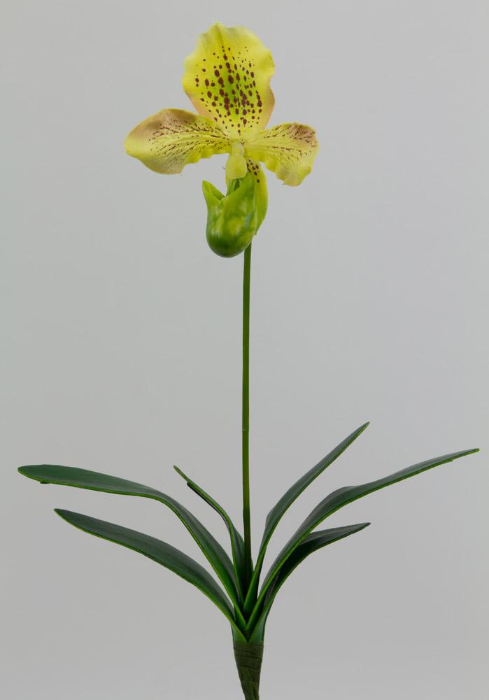 frauenschuh orchidee 28cm creme gelb gr n ga kunstblumen. Black Bedroom Furniture Sets. Home Design Ideas