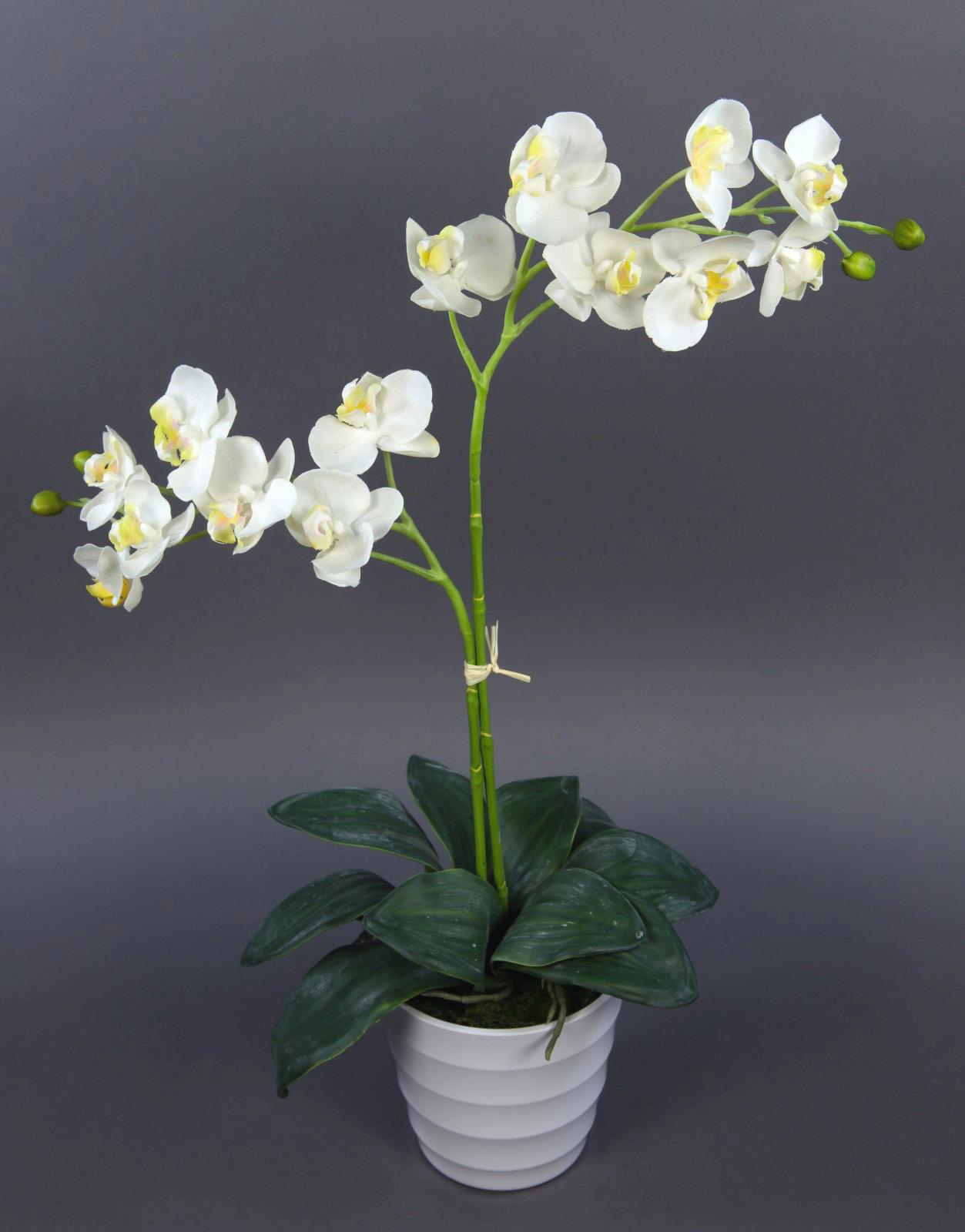 orchidee natural 65cm creme wei im wei en dekotopf pf kunstblumen k nstliche ebay. Black Bedroom Furniture Sets. Home Design Ideas