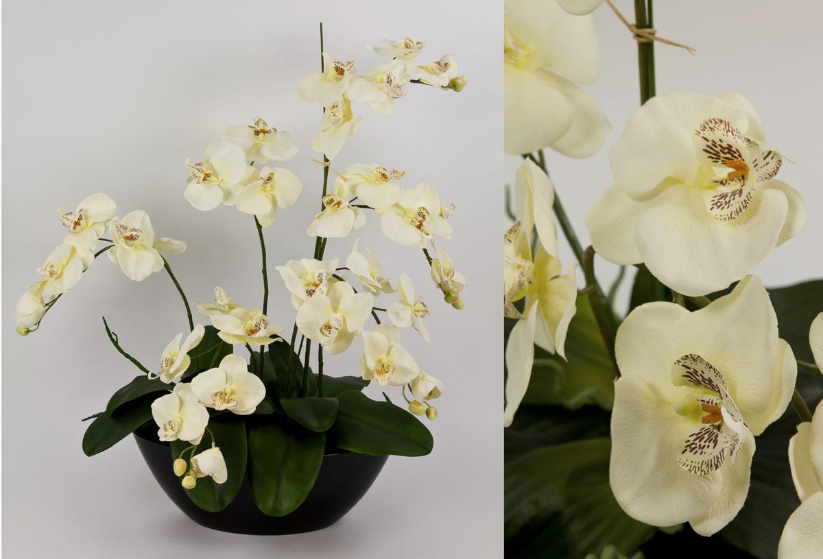 orchideen arrangement 70x60cm creme cg k nstliche orchidee. Black Bedroom Furniture Sets. Home Design Ideas