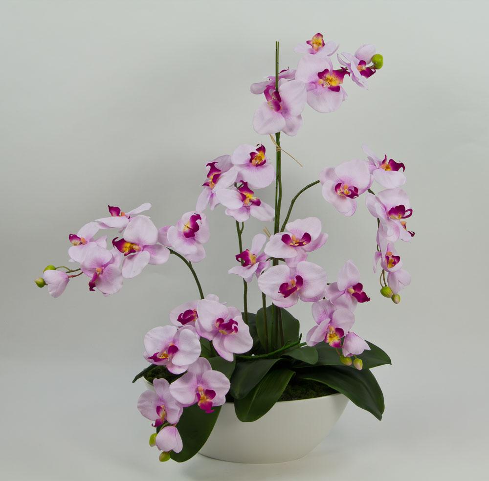 orchideen arrangement 70x60cm rosa pink cg k nstliche. Black Bedroom Furniture Sets. Home Design Ideas