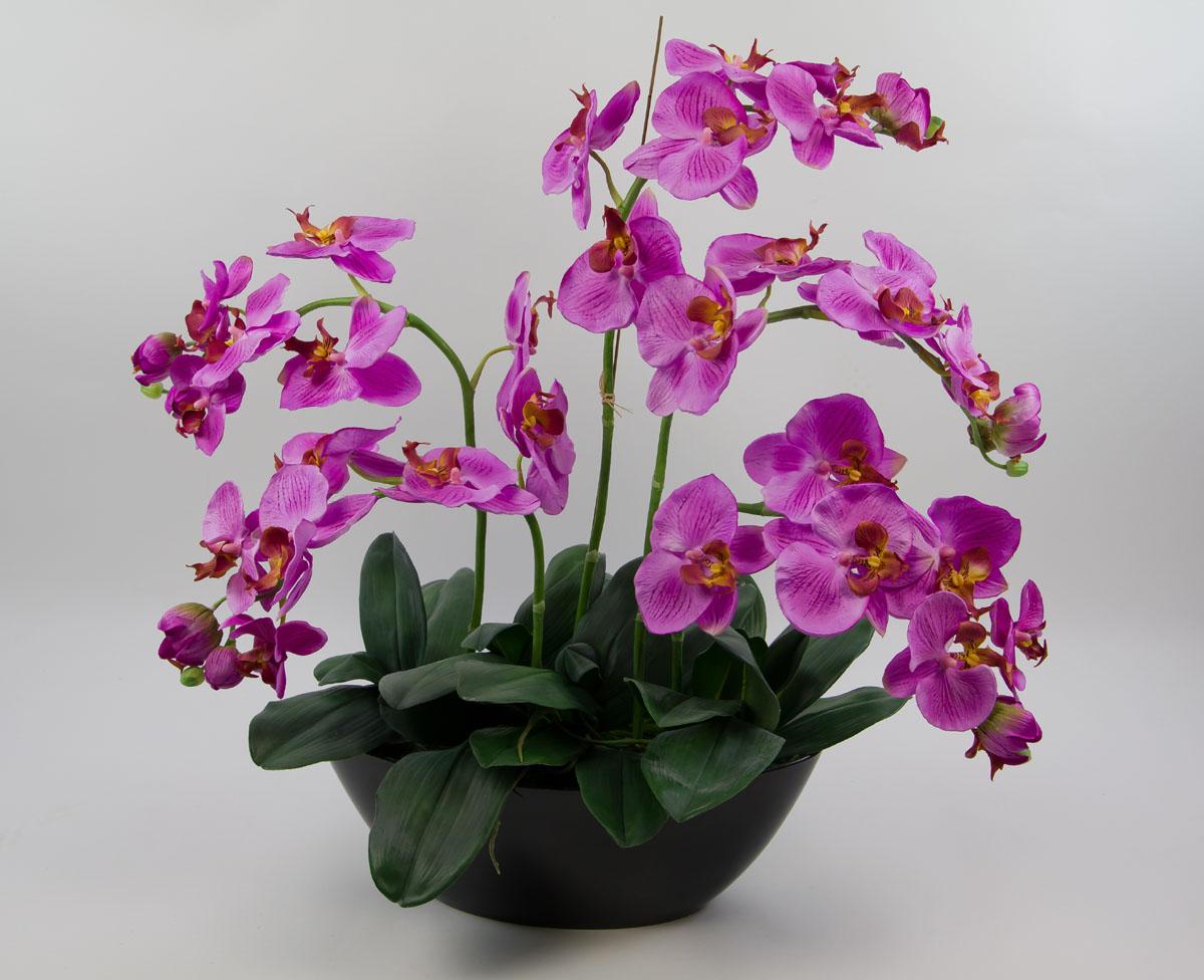 orchideen arrangement 70x60cm pink dp k nstliche orchidee. Black Bedroom Furniture Sets. Home Design Ideas