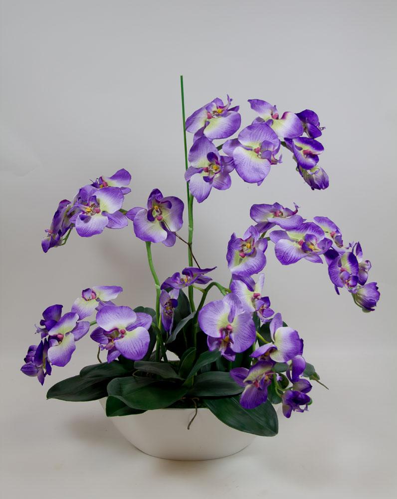Orchideen arrangement 70x60cm violett creme dp orchidee ebay - Orchideen arrangement ...