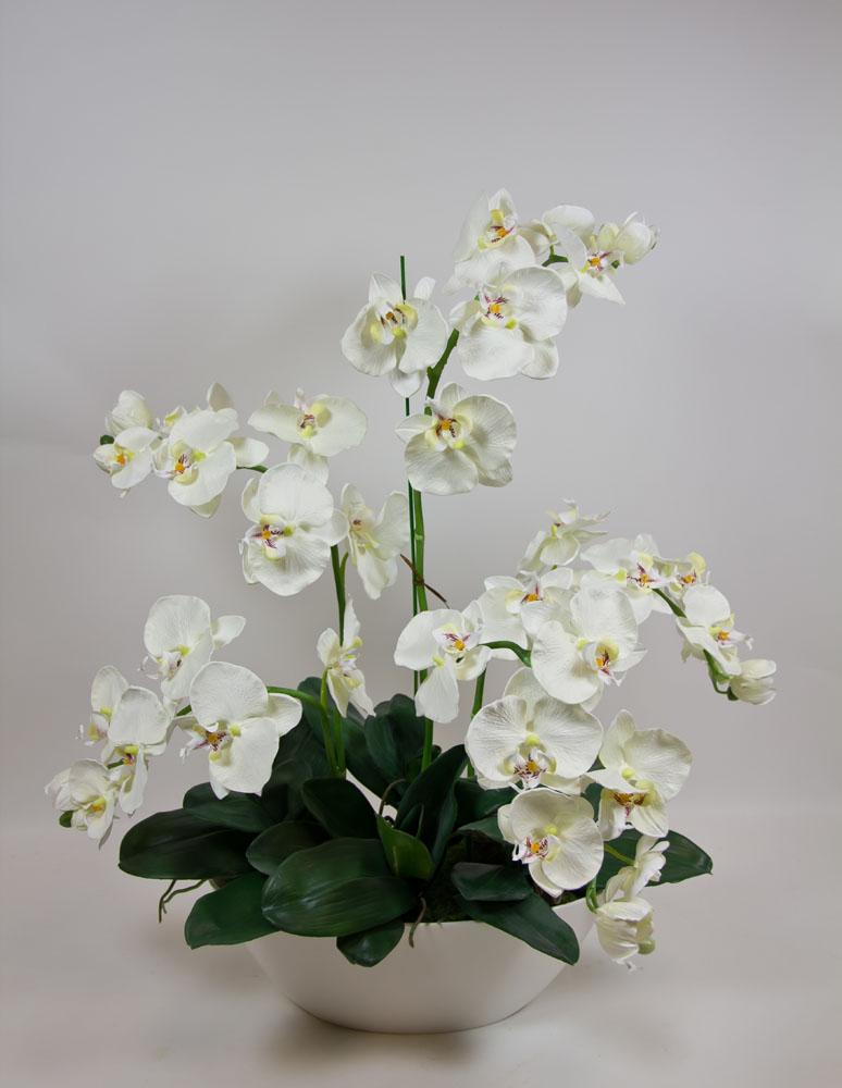 orchideen arrangement 70x60cm wei creme dp orchidee ebay. Black Bedroom Furniture Sets. Home Design Ideas