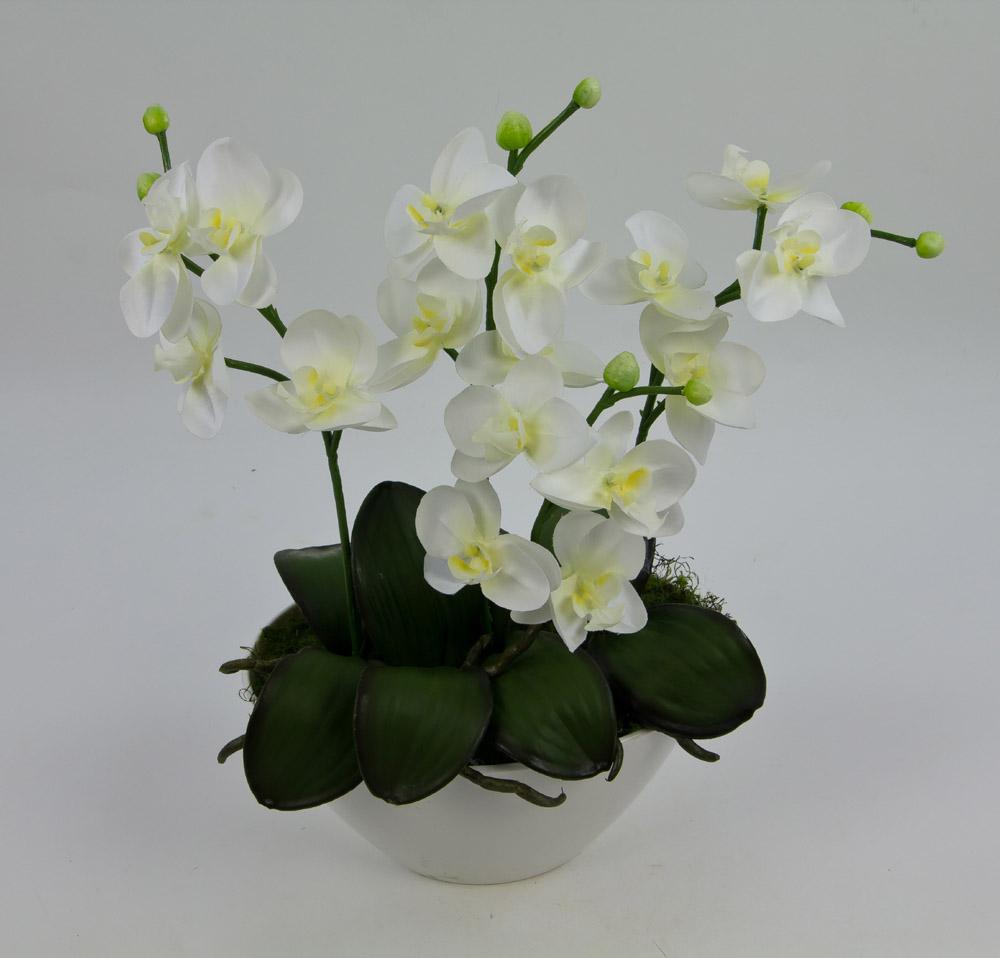 orchideen arrangement 34x32cm wei creme in wei er. Black Bedroom Furniture Sets. Home Design Ideas