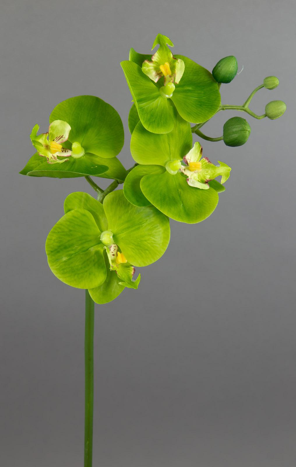 orchideenzweig real touch 48cm gr n k nstliche orchidee blumen kunstblumen ebay. Black Bedroom Furniture Sets. Home Design Ideas