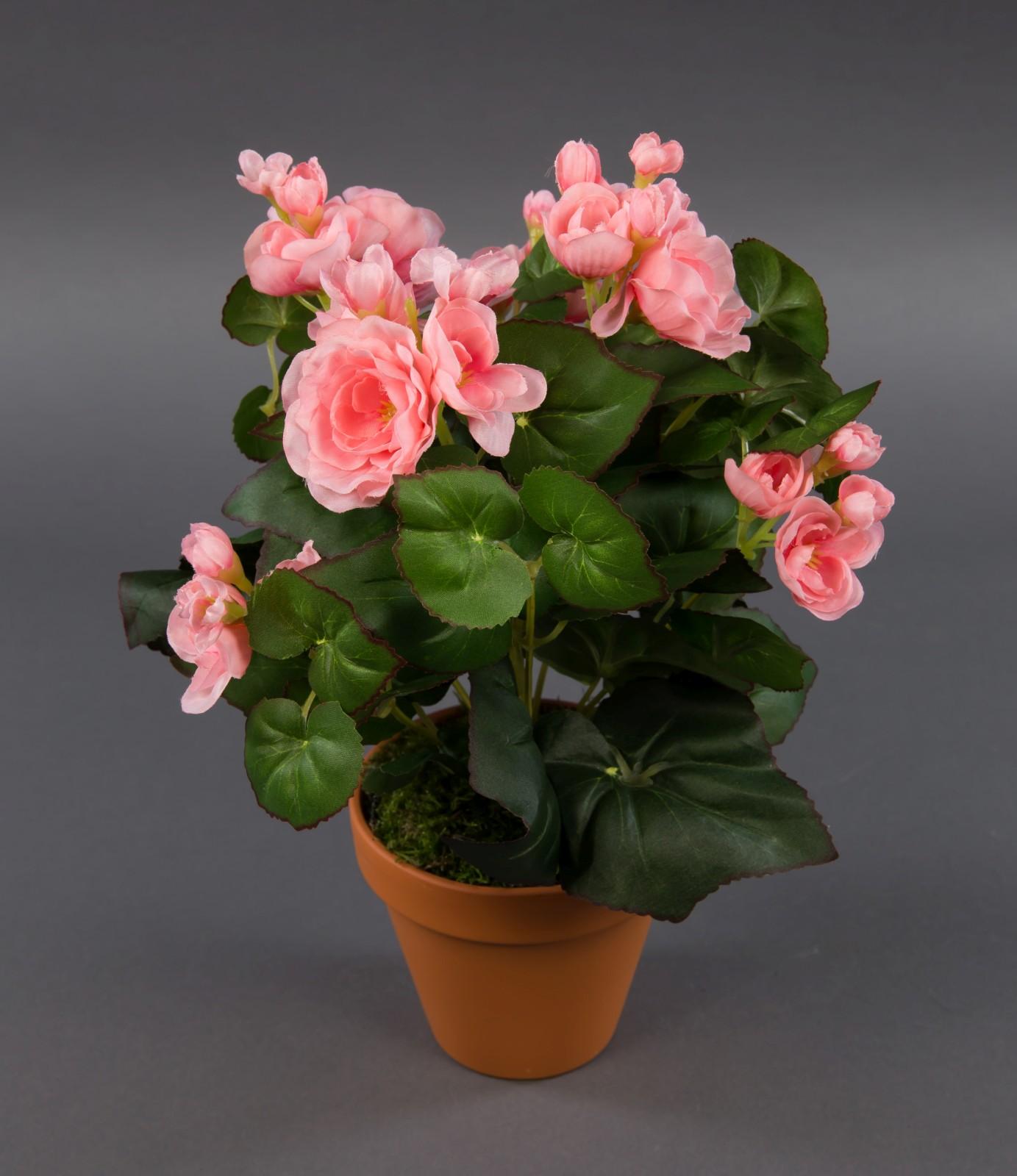 begonie 32cm rosa im topf lm kunstpflanzen k nstliche blumen kunstblumen ebay. Black Bedroom Furniture Sets. Home Design Ideas
