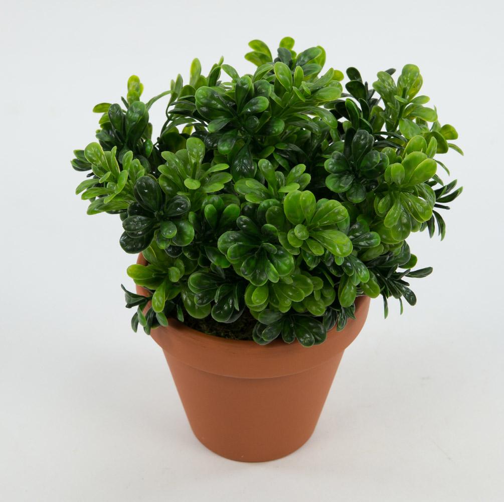 buchsbusch 22cm im topf ar k nstliche pflanzen buxbusch. Black Bedroom Furniture Sets. Home Design Ideas