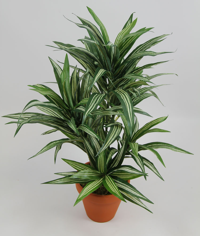 dracena 42cm gr n gelb im topf da k nstliche pflanzen kunstpflanzen kunstpalmen 4260355151659 ebay. Black Bedroom Furniture Sets. Home Design Ideas
