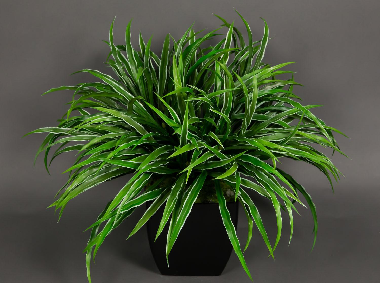 dracenabusch 48x38cm gr n wei im schwarzen dekotopf yf kunstpflanzen dracena ebay. Black Bedroom Furniture Sets. Home Design Ideas