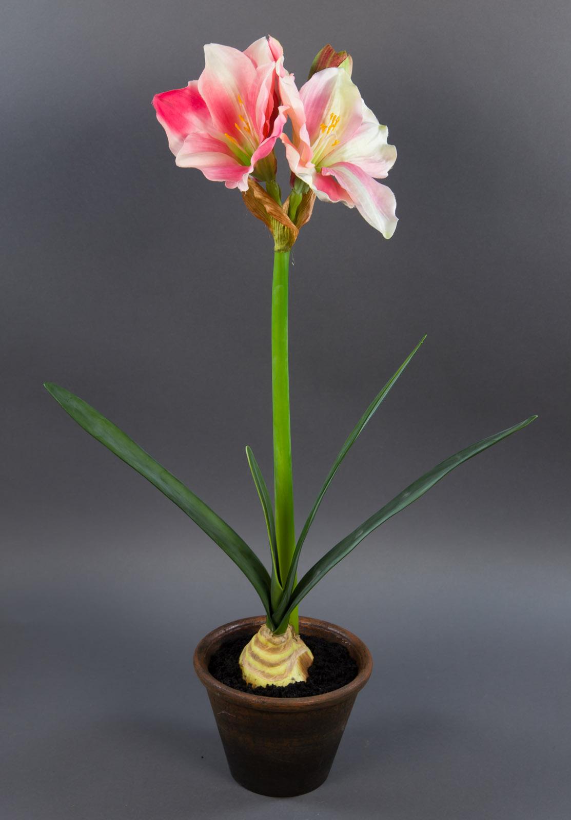 gro e amaryllispflanze 67cm rosa creme kunstpflanzen k nstliche amaryllis blumen ebay. Black Bedroom Furniture Sets. Home Design Ideas