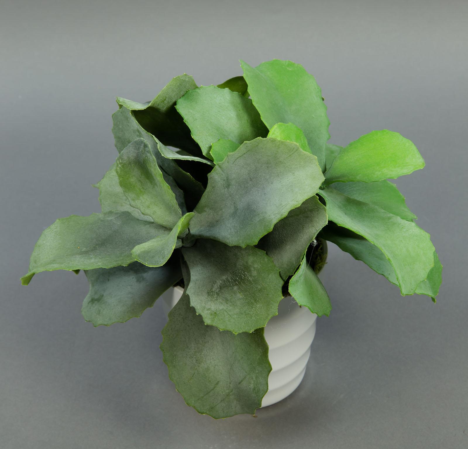kalanchoe 24cm im wei en dekotopf ga kunstpflanzen k nstliche pflanzen ebay. Black Bedroom Furniture Sets. Home Design Ideas