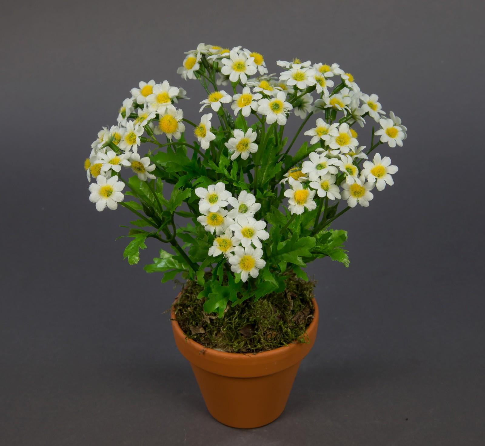 kamillenbusch 25cm im topf cg k nstliche blumen kunstblumen kunstpflanzen ebay. Black Bedroom Furniture Sets. Home Design Ideas