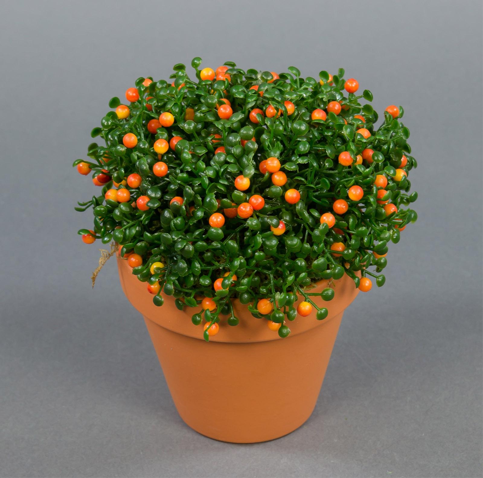 nertera pflanze orange 15cm im topf pf kunstpflanzen. Black Bedroom Furniture Sets. Home Design Ideas