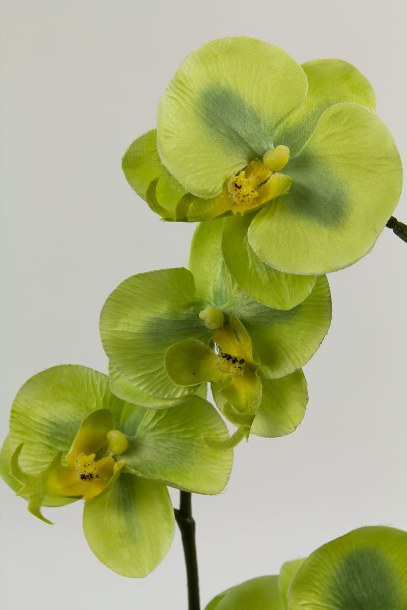 orchidee gr n ar kunstblumen seidenblumen k nstliche blumen kunstpflanzen ebay. Black Bedroom Furniture Sets. Home Design Ideas