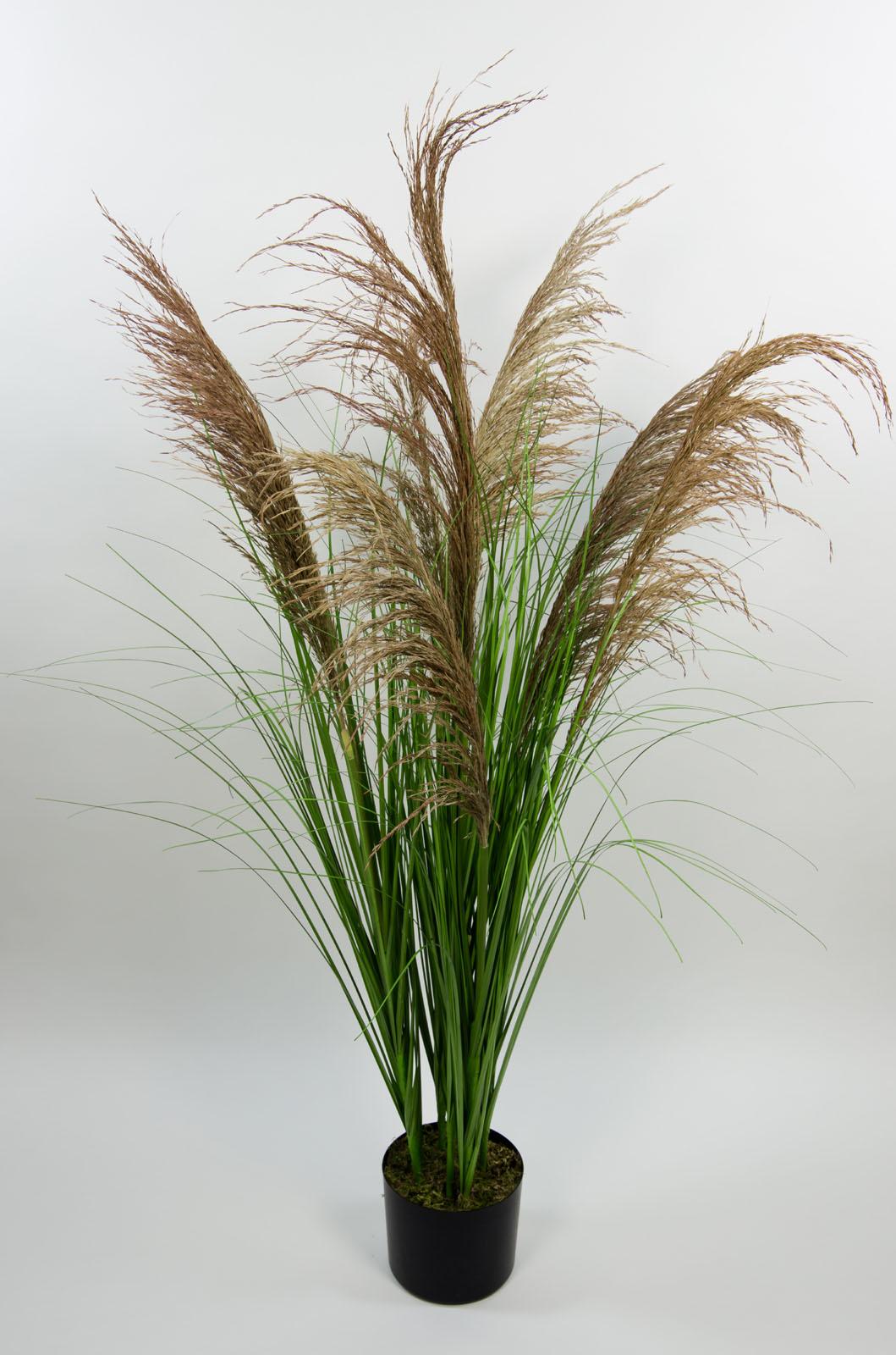pampasgras 120cm im topf pf kunstpflanzen k nstliche pflanzen gras kunstgras ebay. Black Bedroom Furniture Sets. Home Design Ideas